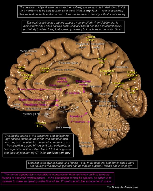 Learn anatomy online